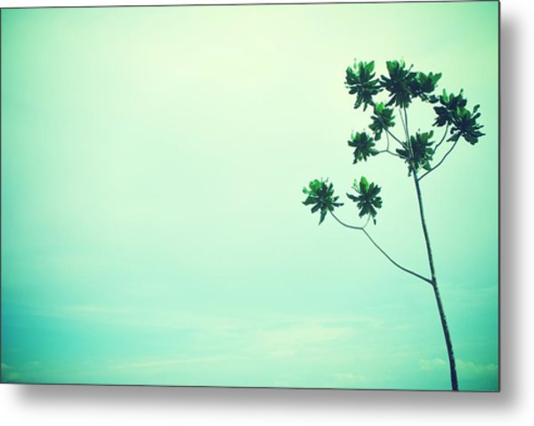 Solitary Tree Metal Print by Susette Lacsina