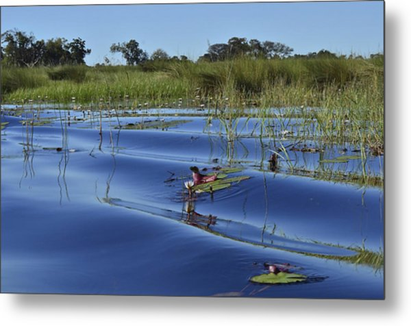 Solitude In The Okavango Metal Print