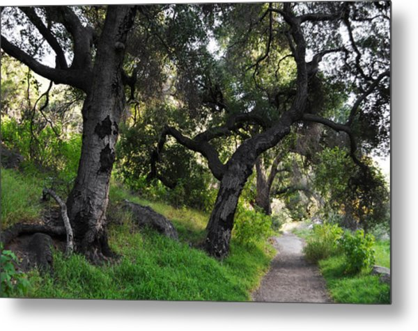 Solstice Canyon Live Oak Trail Metal Print