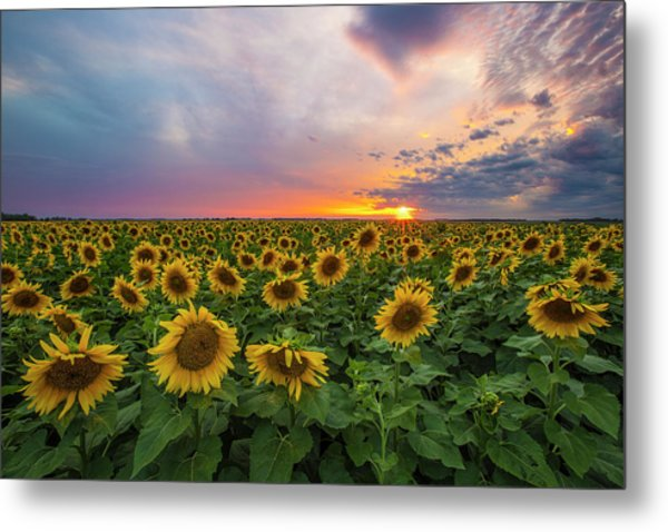 Metal Print featuring the photograph Somewhere Sunny  by Aaron J Groen