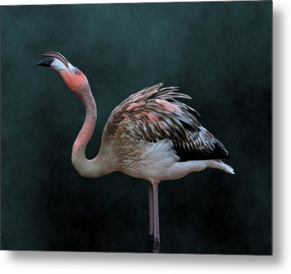 Song Of The Flamingo Metal Print