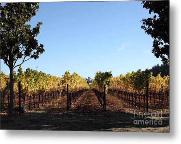Sonoma Vineyards - Sonoma California - 5d19314 Metal Print