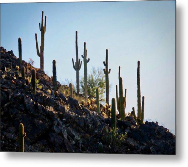 Sonoran Desert Saguaro Slope Metal Print