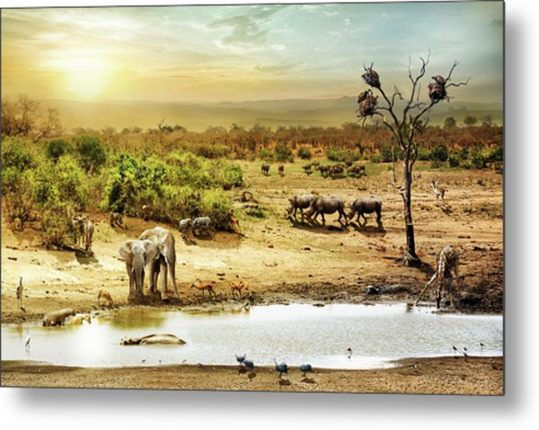 South African Safari Wildlife Fantasy Scene Metal Print