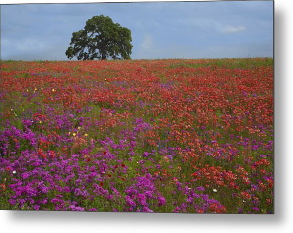 South Texas Bloom Metal Print