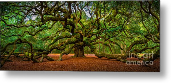 Angel Oak In Charleston Metal Print