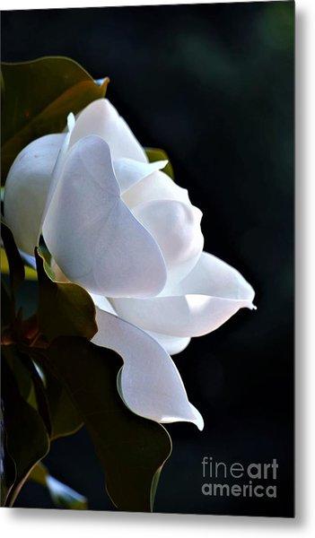 Southern Magnolia Profile Metal Print