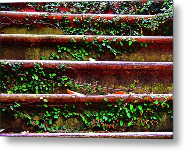 Southern Ivy Steps Metal Print by JAMART Photography