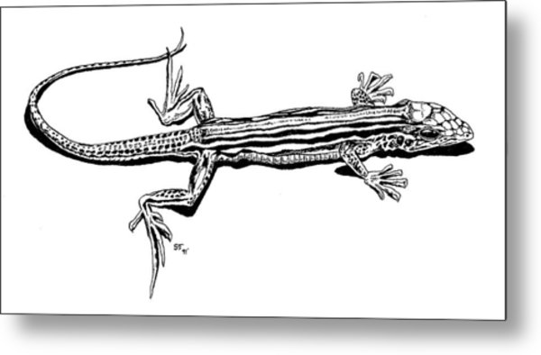 Southwest Lizard Metal Print by Stephen Taylor