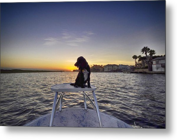 Spaniel At Sunset Metal Print