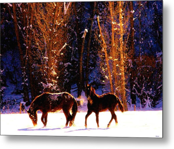 Spanish Mustangs Playing In The Powder Snow Metal Print