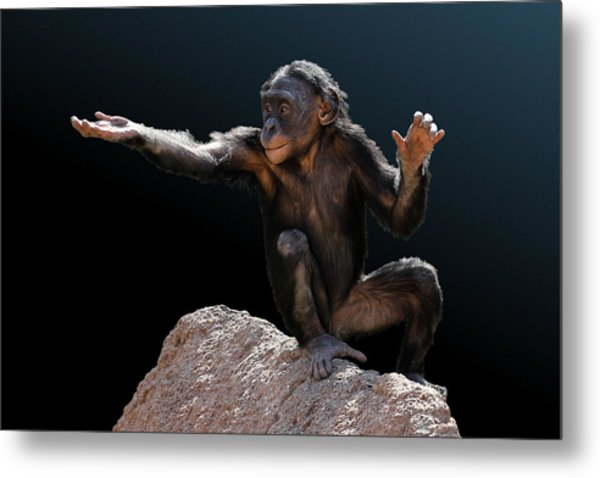 Spare Change? - Bonobo Metal Print