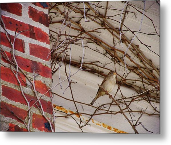 Sparrow Metal Print by JAMART Photography
