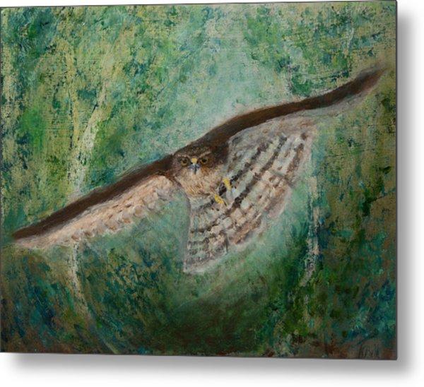 Sparrowhawk Hunting Metal Print