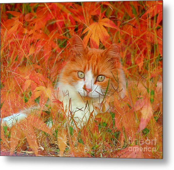 Special Kitty Metal Print