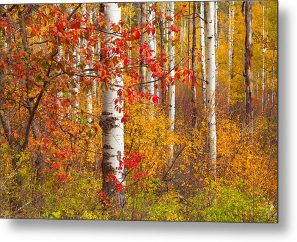 Special Place In The Forest Metal Print