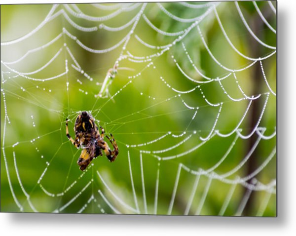 Spider And Spider Web With Dew Drops 05 Metal Print