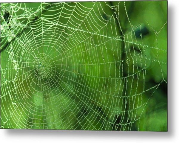 Spider Dew Metal Print
