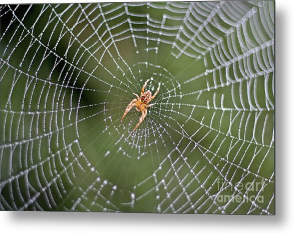 Spider In A Dew Covered Web Metal Print