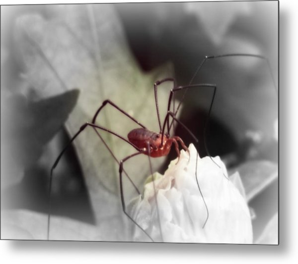 Spider On A Flower Metal Print