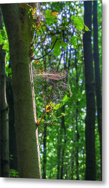 Spider Web In A Forest Metal Print