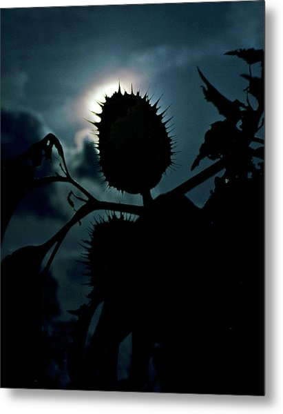 Spike Seed Pod Metal Print by Dave Chafin