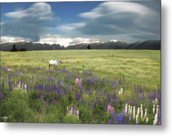 Spirit Pony In High Country Lupine Field Metal Print