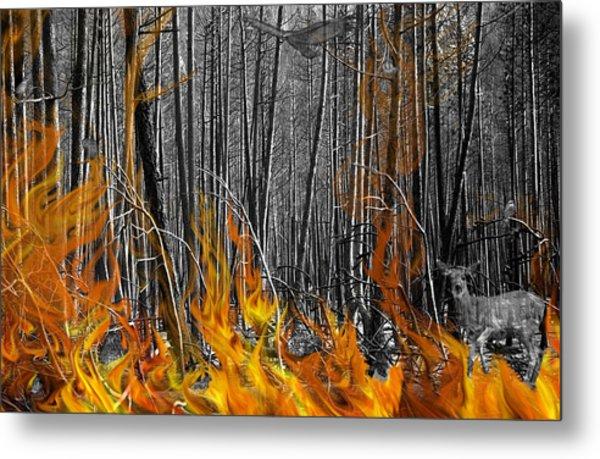 Spirits Of The Firestorm Metal Print by Diane C Nicholson