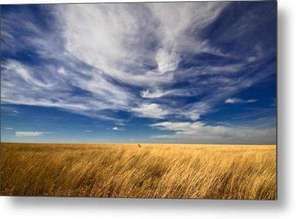 Splendid Isolation Metal Print