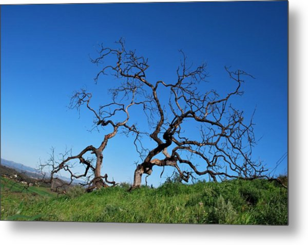 Split Single Tree On Hillside Metal Print