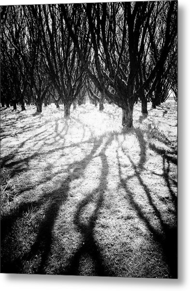 Spooky Forest Metal Print