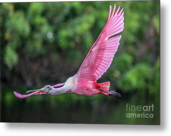 Spoony In Flight Metal Print