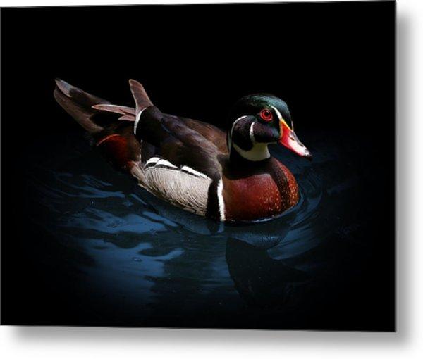 Spotlight On A Wood Duck Metal Print
