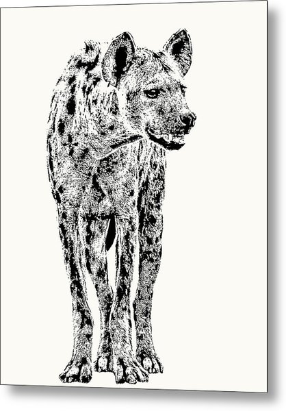 Spotted Hyena Full Figure Metal Print