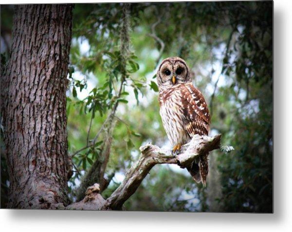 Spotted Owl II Metal Print