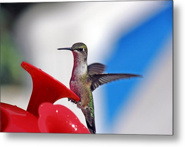 Spreading My Wings  Metal Print