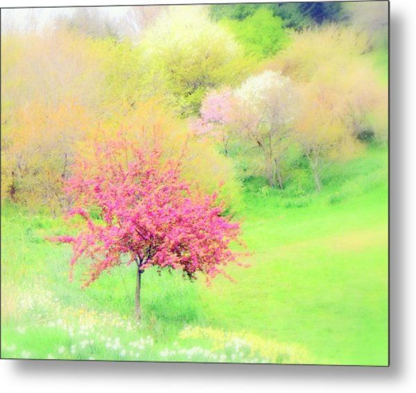 spring at Highland Park  Metal Print