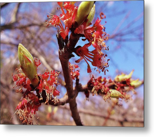 Spring Bloom #1 Metal Print