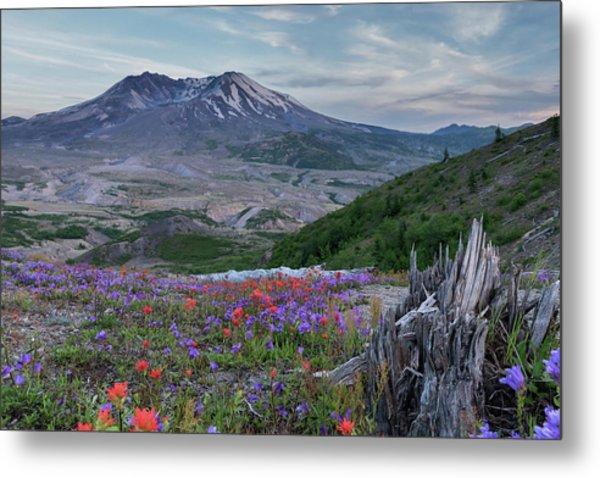 Spring Bloom Mt St Helens Metal Print
