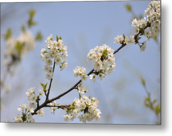 Spring Blossom Metal Print by Gwen Allen
