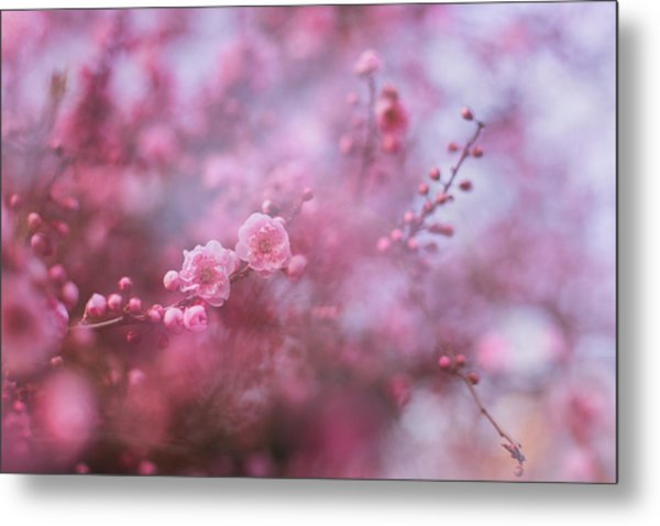 Spring Blossoms In Their Beauty Metal Print