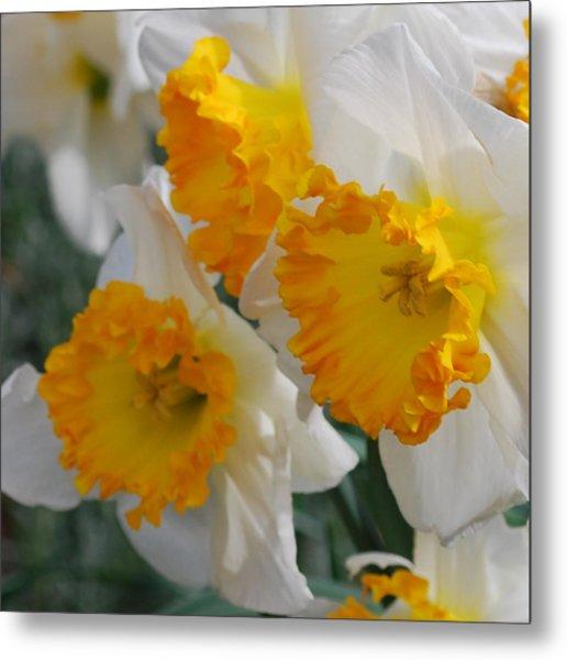 Spring Daffodils Metal Print by Linda Sramek