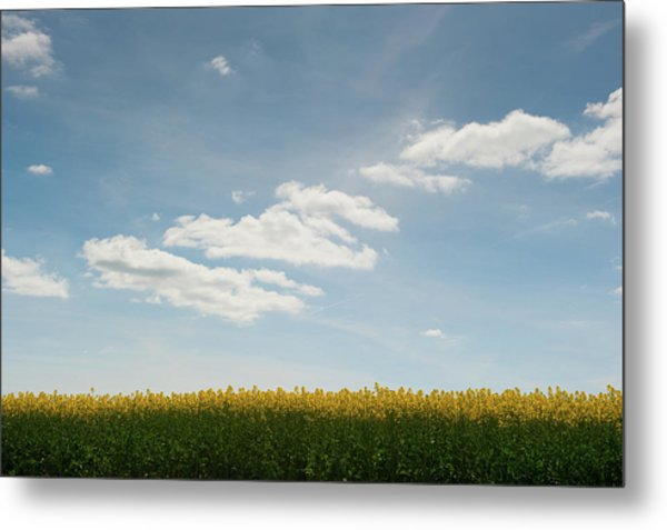 Spring Day Clouds Metal Print