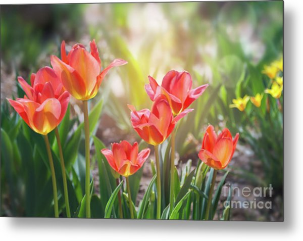 Spring Favorites Metal Print