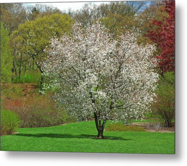 Spring Fever Metal Print by Juergen Roth