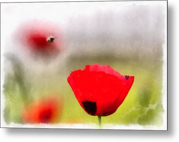 Spring Flowering Poppies Metal Print