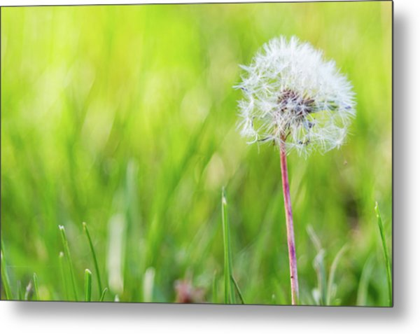Spring Growth Metal Print