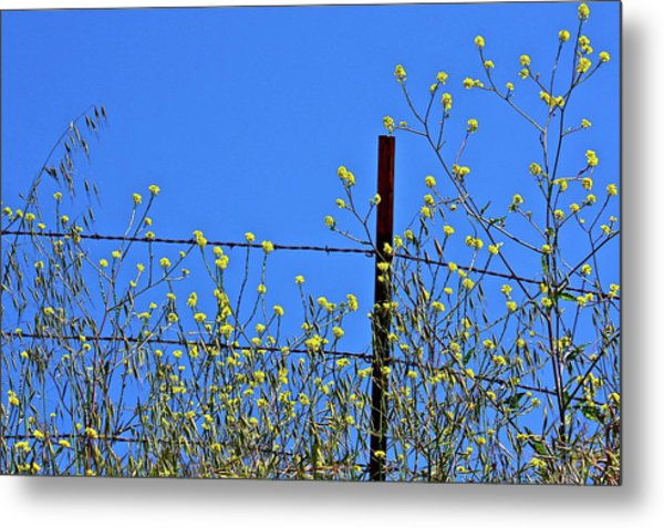 Spring In The Country Metal Print