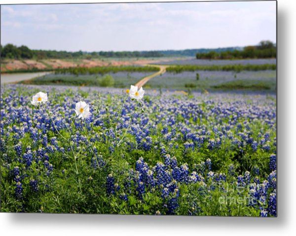 Spring In The Hill Country Metal Print
