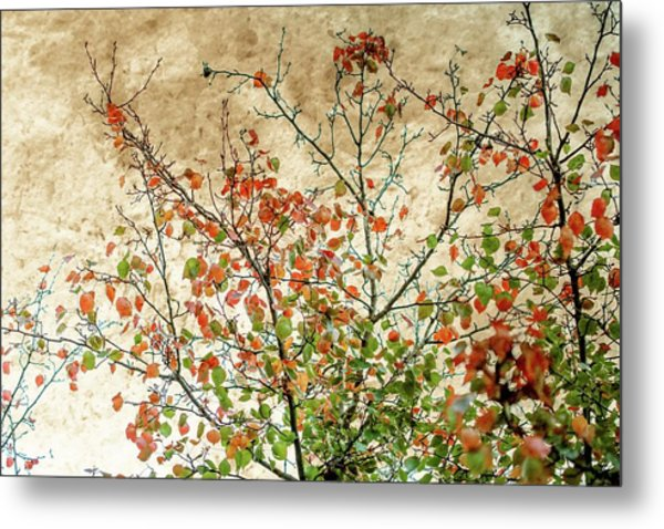Spring Is Gone Metal Print